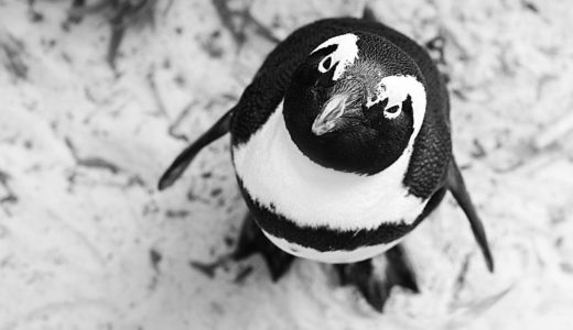 コンプレックスに悩んだときに思い出したいこと~ペンギンは本当に飛べないのか?