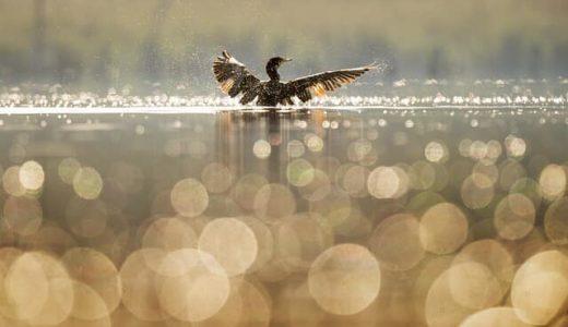 【アランの幸福論】思考が悲しみに翼を与え、私たちを飛翔させてくれる