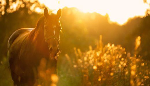 人間万事塞翁が馬【不運を幸運に変える方法とは?】なすべきことをなそう!そうすれば、なるようになる